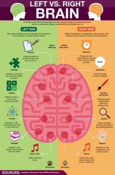 Medinook   Left Brain - Right Brain Theory